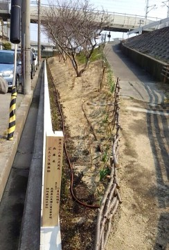 平成28年2月28(日) どんぐり倶楽部公園開式に出席